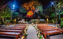 2 rows of benches adorned with candles and flowers leading to an illuminated tree